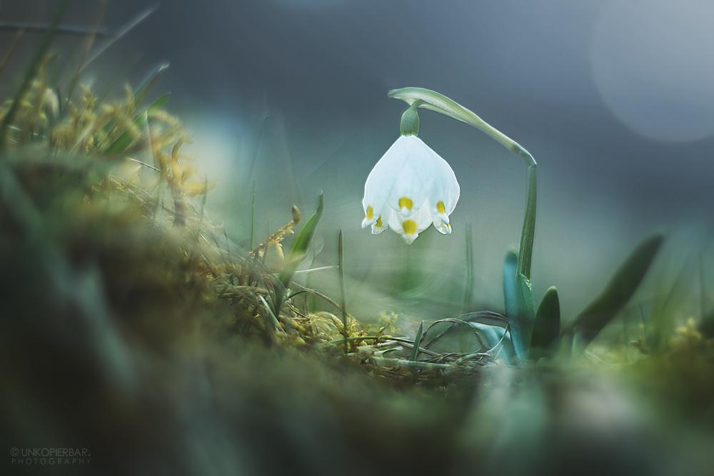 Spring Chandelier by Unkopierbar