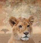 Genus Panthera Leo