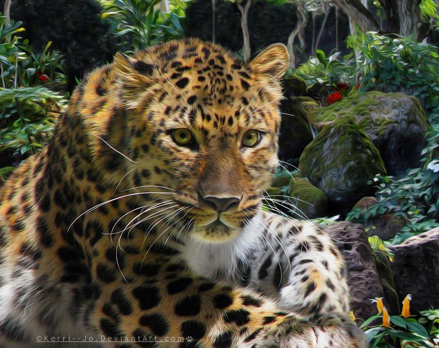Amur Leopard by Kerri--Jo