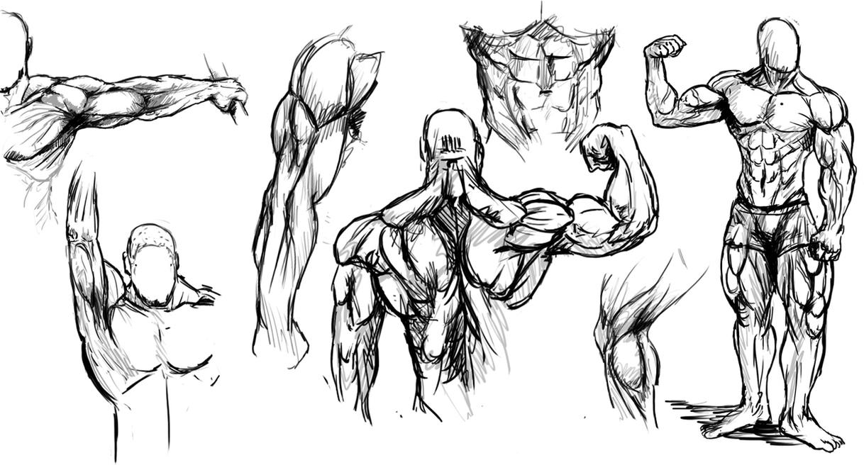 This is a photo of Amazing Back Muscle Drawing