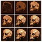 Digital painting skull study process