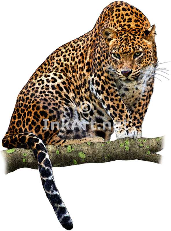 Sri Lankan Leopard by rogerdhall