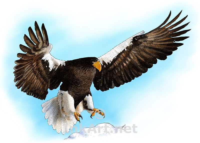 Steller's Sea Eagle by rogerdhall