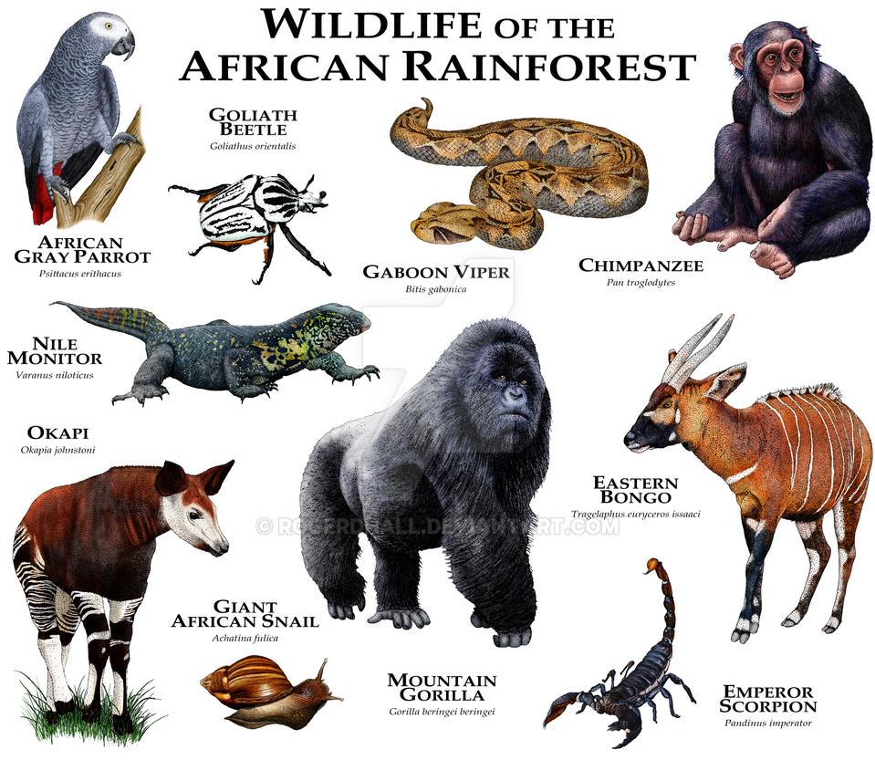 African Rainforest by rogerdhall