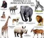 Animals of the African Savanna