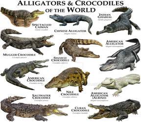 Alligators and Crocodiles of the World