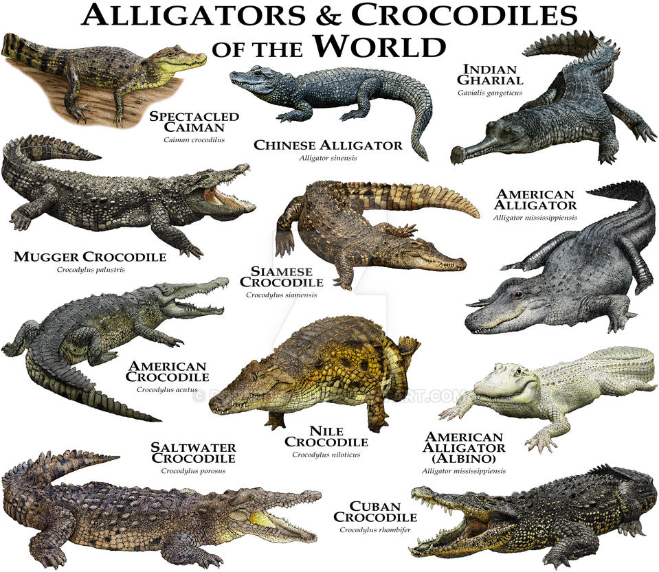 alligators and crocodiles of the world by rogerdhall on