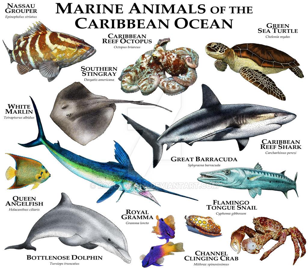 Marine Animals of the Caribbean Ocean by rogerdhall