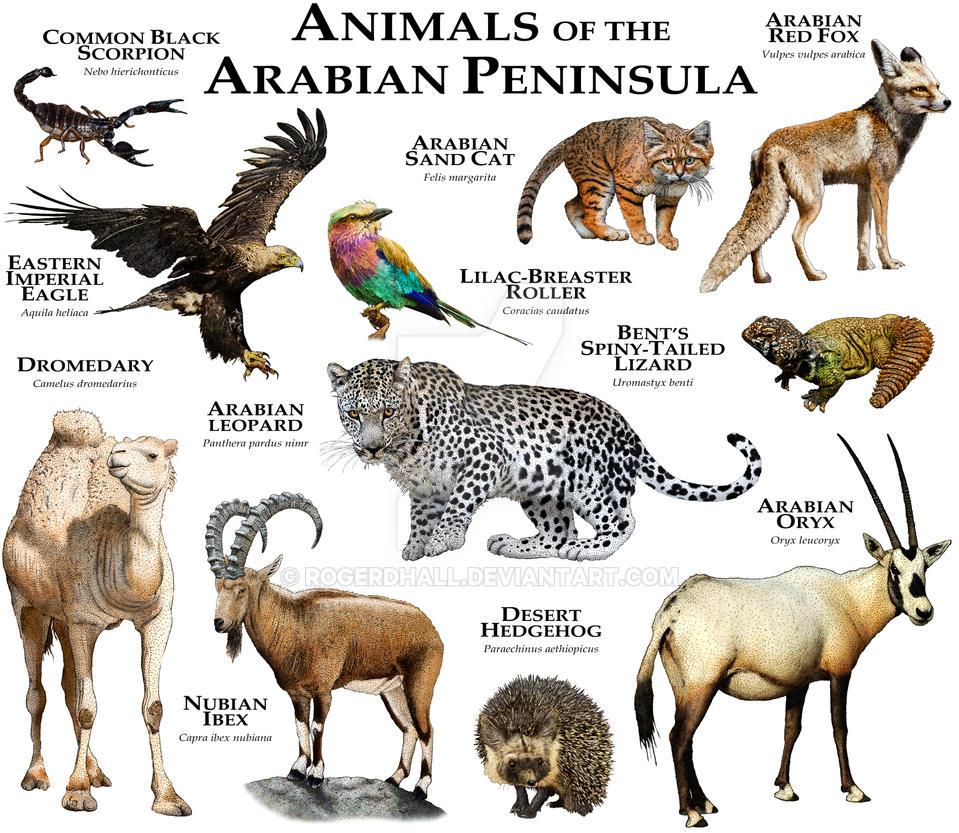 Animals of the Arabian Peninsula by rogerdhall
