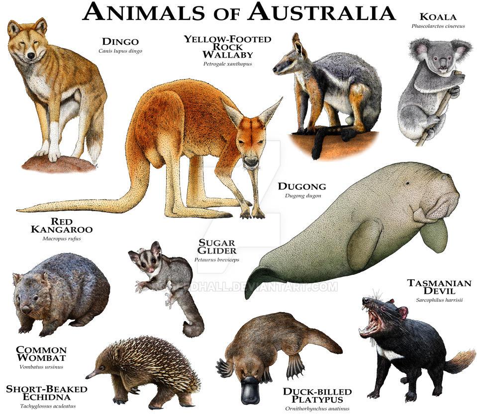 Native Australian Anim...