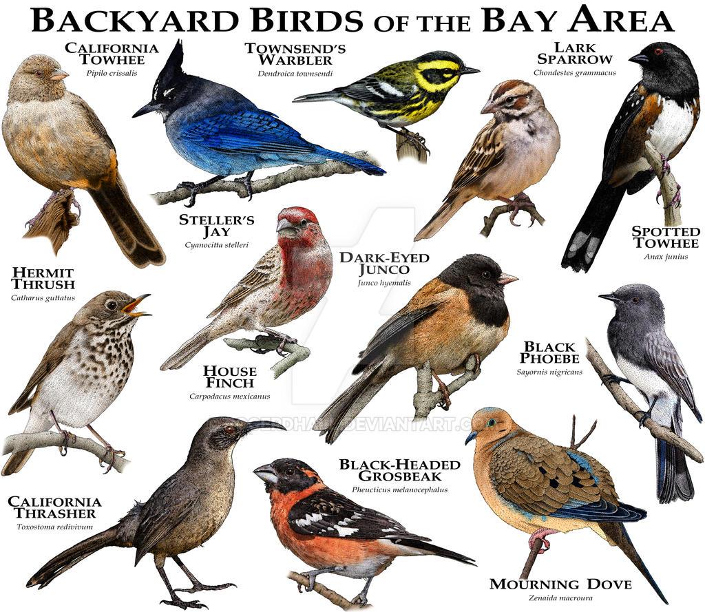 Bay Area Birds by rogerdhall