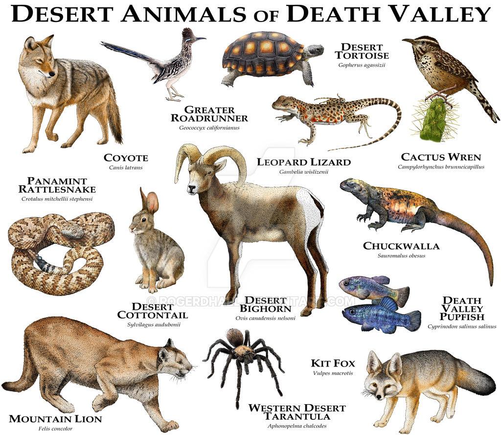 Desert Animals of Death Valley by rogerdhall on DeviantArt