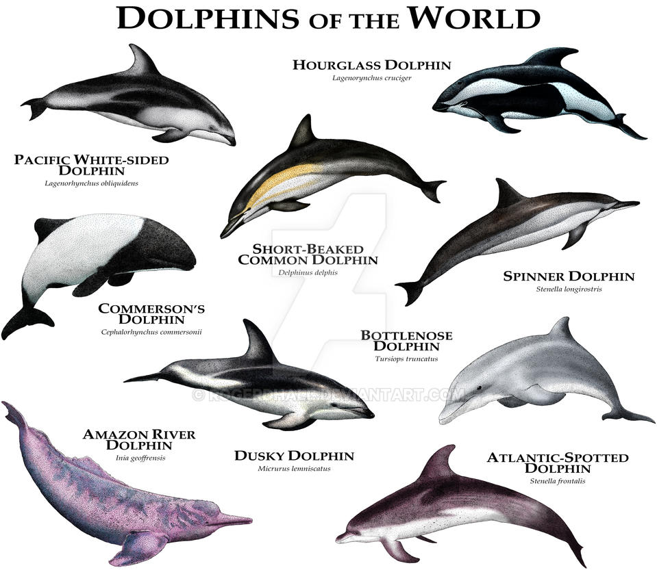 dolphins_of_the_world_by_rogerdhall-d8tq