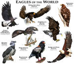 Eagles of the World