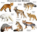 Foxes of the World