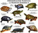 Freshwater Turtles of North America