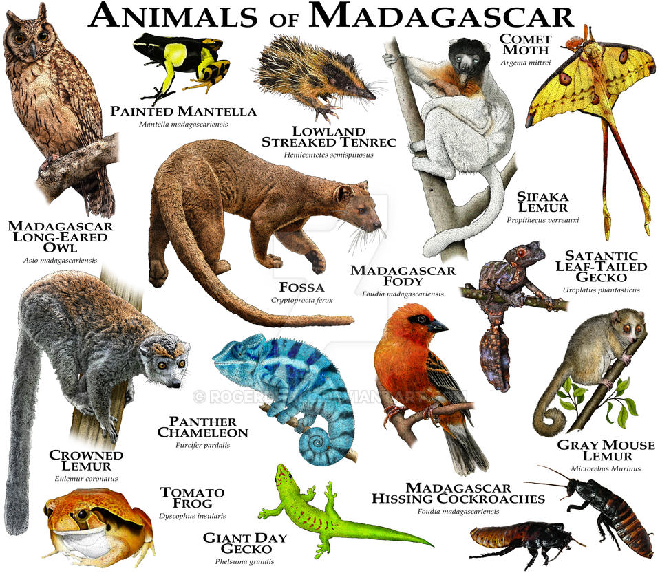 Animals of Madagascar by rogerdhall on DeviantArt