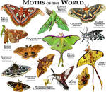 Moths of the World