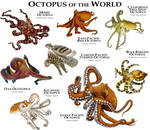 Octopus of the World