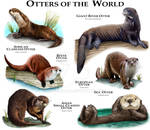 Otter of the World