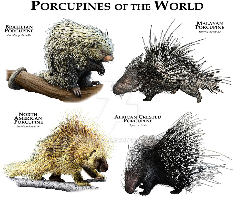 Porcupines of the World by rogerdhall on DeviantArt