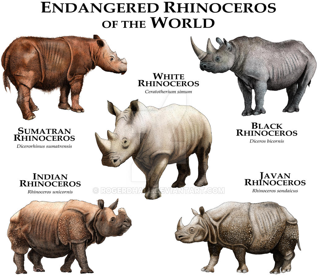 rhinoceros and world Poachers slaughtering rhinoceros for their horn and the traffickers who send it around the world can be traced back to the scene of their crime using dna evidence that links the illegal horn to the dead animal.
