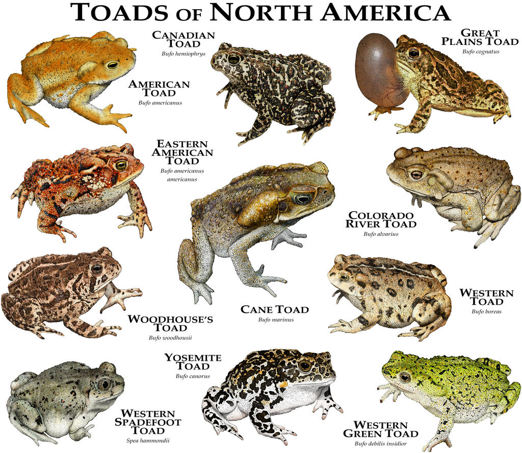 a quick analysis of the reptile species in the biology In 2010 an analysis  australia, 83% of mammals, 89% of reptiles,  adaptation is one of the two main processes that explain the diverse species we see in biology.