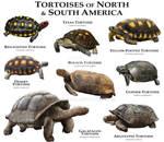 Tortoises of the Americas