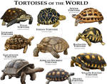 Tortoises of the World