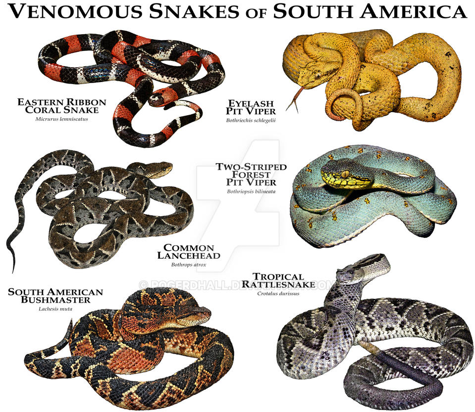 the origins and types of snakes in north america As species, they only migrate via dispersal of their seeds, but it's a slow process the north american trees of today have endured many glacial advances and retreats and countless fires this article begins a two-part series on the history of north american forests.