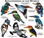 Kingfishers of the World