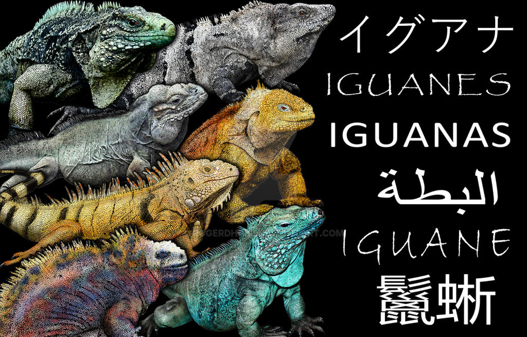 Iguana-poster by rogerdhall