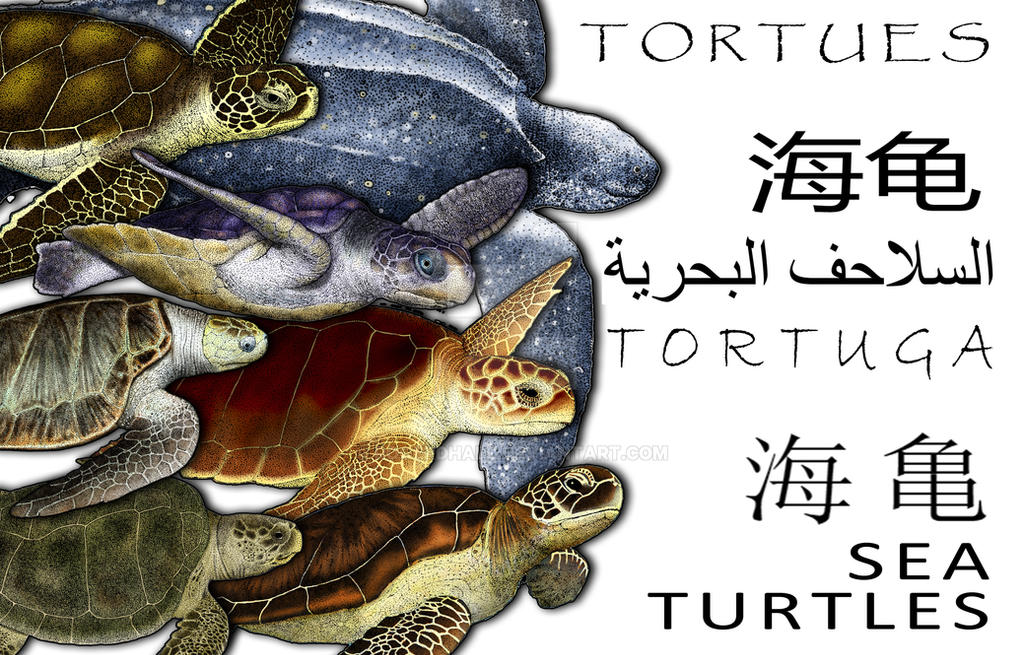Sea Turtles Collage by rogerdhall