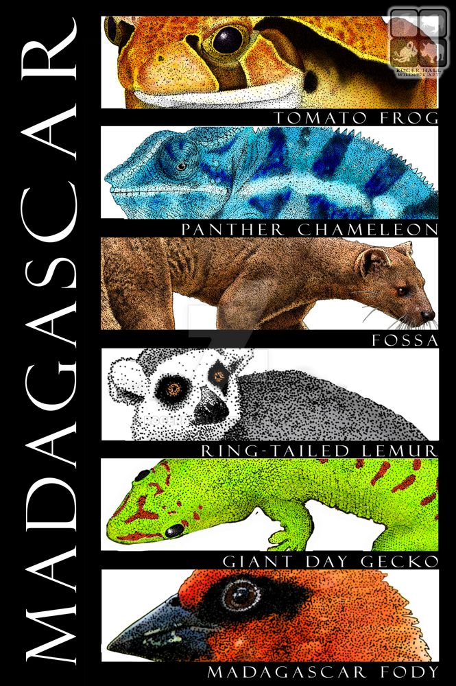 Madagascar Animals Poster Design by rogerdhall