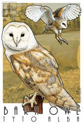 Barn Owl by rogerdhall