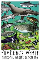 Humpback Whale National Marine Sanctuary