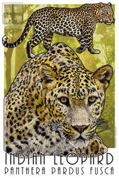 Indian Leopard by rogerdhall