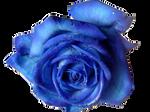 Blue Rose PNG