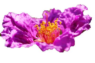 Pretty purple flower png by vixen1978 on deviantart pretty purple flower png by vixen1978 mightylinksfo