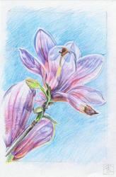 Flower #7 sketch