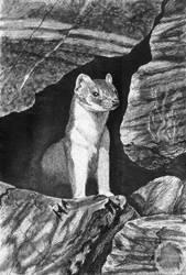 Weasel by Kivuli
