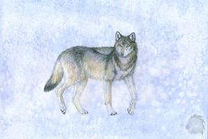Wolf by Kivuli