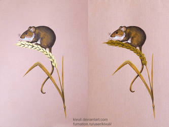 The harvest mouse by Kivuli