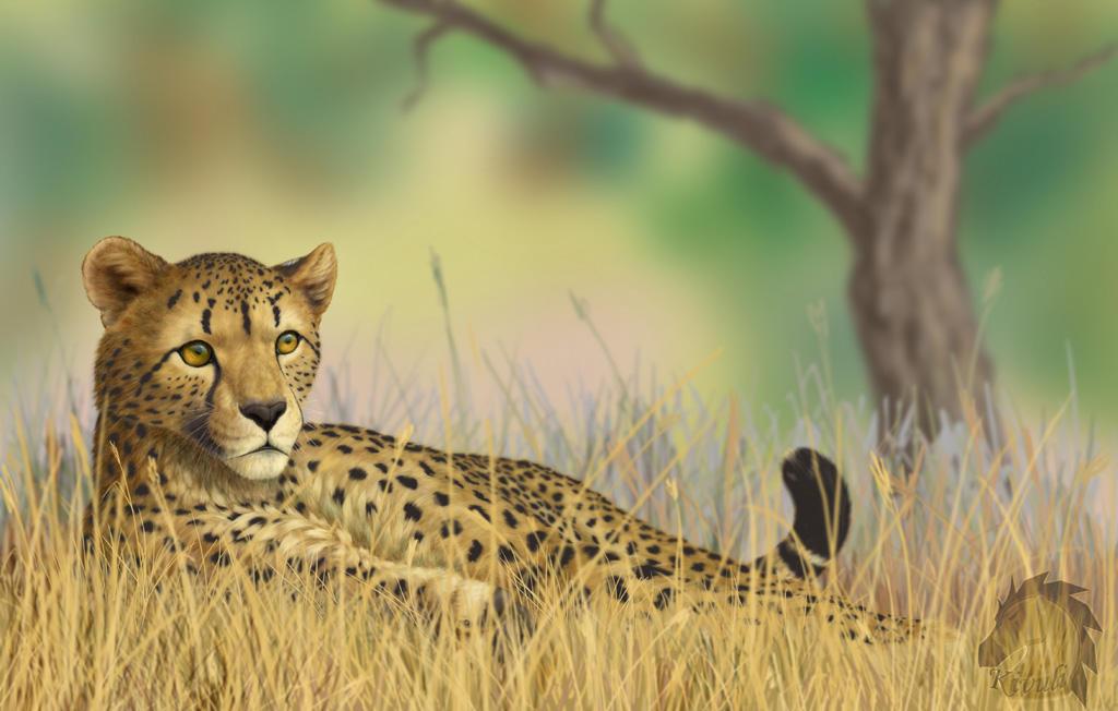 Lying cheetah by Kivuli