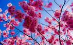 spring I