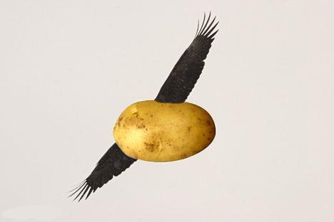 http://orig15.deviantart.net/d0ba/f/2011/052/9/6/flying_potato_by_erbemirbe-d3a1tmr.jpg