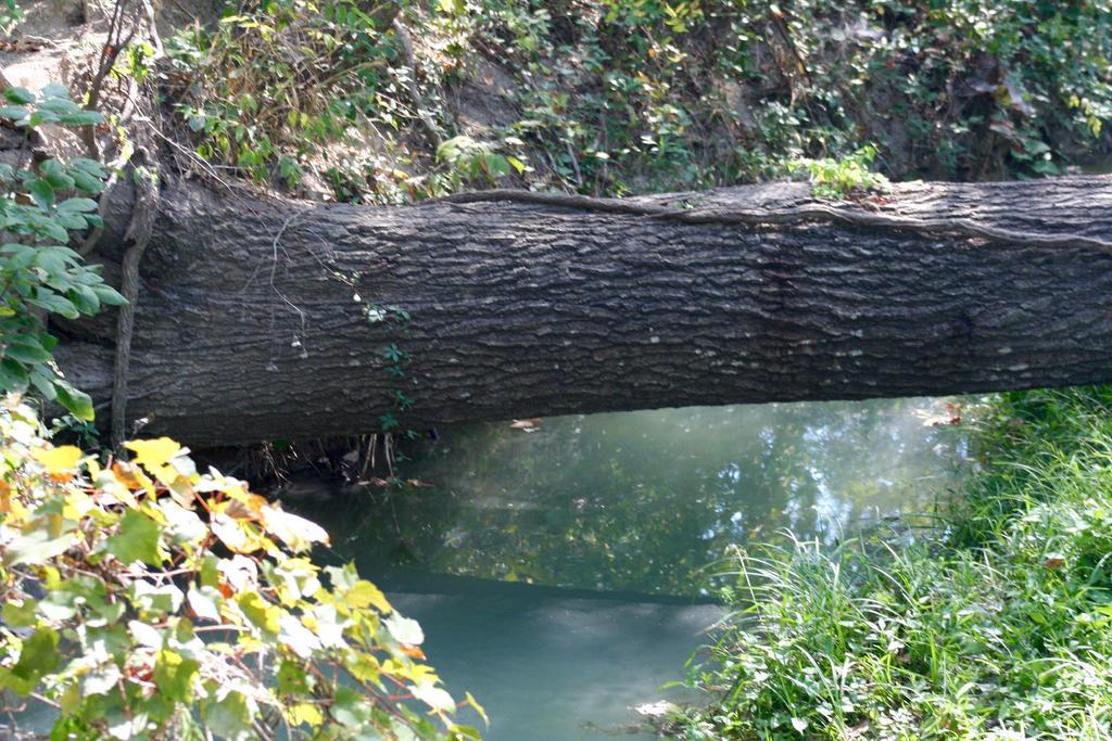Natural Bridge by TxPremier