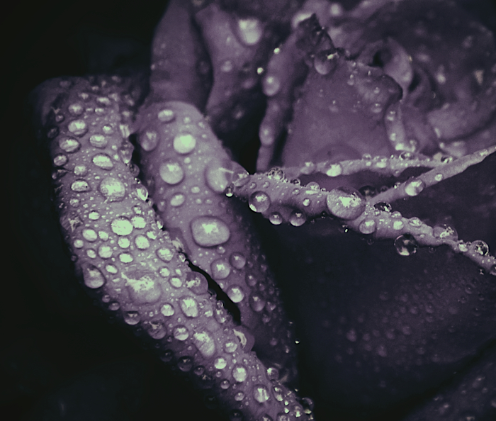 purple heart .: by ShadyBlues