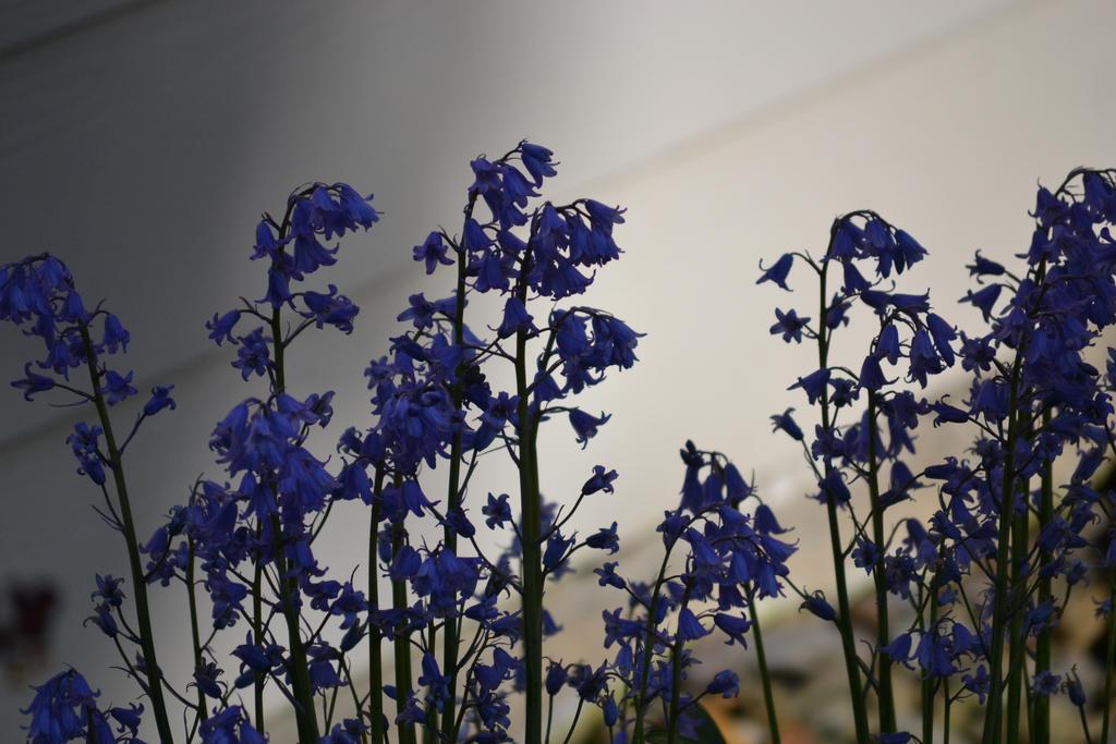 a shade of purple by chanmanthechinaman