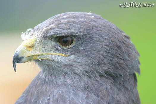 Eagle eyes II